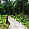Boardwalk on the Sundew Trail
