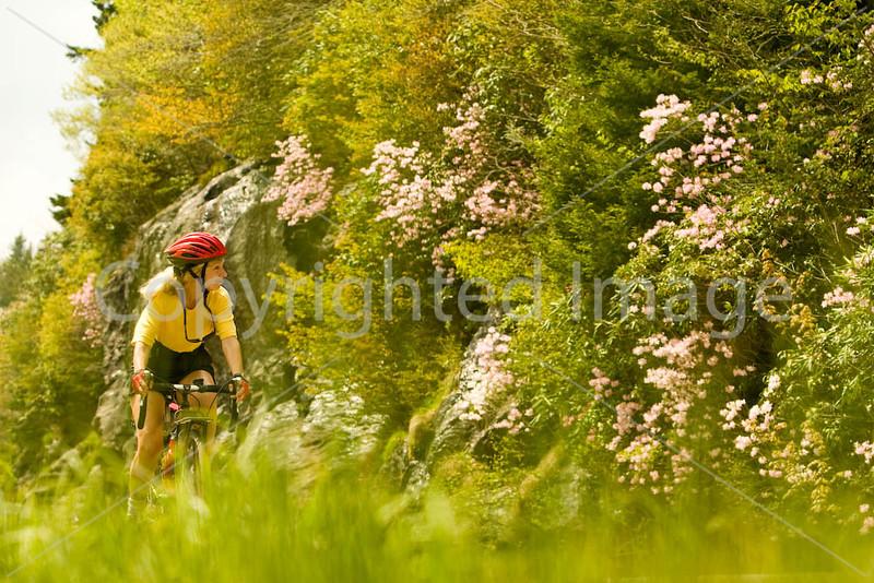 Blue Ridge - rhododendron - 72 dpi - -0069