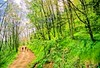 B_nc_heintooga_12_ORps_72_dpi_Heintooga_Trail_in_Great_Smoky_Mountains_National_Park_in_North_Carolina_2_2 highlight