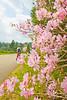 B Blue Ridge - rhododendron - 72 dpi - -0024
