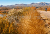 Bosque del Apache Nat'l Wildlife Refuge, New Mexico-0173 - 72 ppi