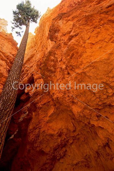 Bryce Canyon Nat'l Park, Utah - 3 - 72 ppi