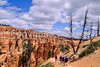 Day hikers in Utah's Bryce Canyon National Park - 13 - 72 ppi
