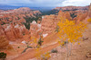 Fall color ignites aspen trees in Bryce Canyon National Park.