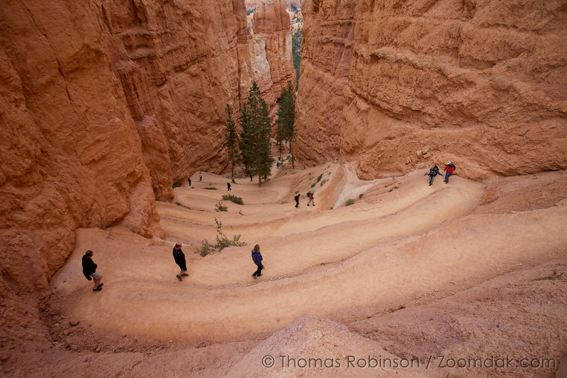 Hikers work their way down Navajo Loop trail  which switchbacks through Wall Street in Bryce Canyon National Park.