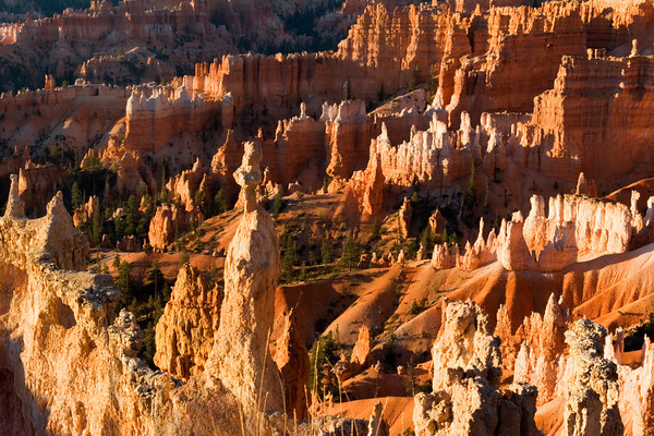 Bryce Canyon Amphitheatre At Sunrise Point