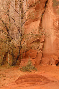 Canyon de Chelly rock forms
