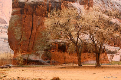 Canyon de Chelly trees
