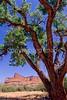 Canyonlands National Park, Utah - 24 - 72 dpi