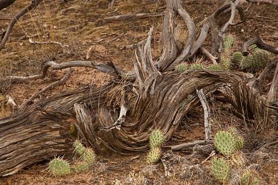CNP-170928-0024 Cactus