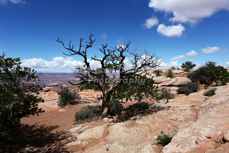 Canyonlands National Park near Moab, Utah