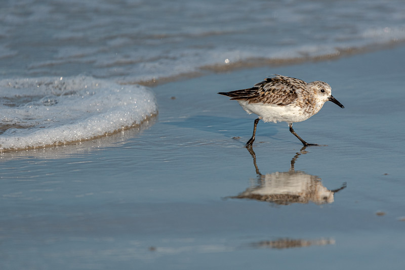 The Sanderling Run