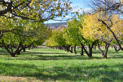 Fruit Tree Orchards