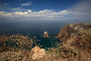 North Bluff Trail between Cavern Point and Potato Harbor.  Island buckwheat (Eriogonum grande var. grande), Castilleja lanata ssp. hololeuca, California sagebrush (Artemesia californica)