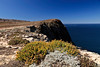 Cavern Point.  (Isocoma menziesii)  Goldenbush