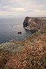 Cavern Point.  San Miguel locoweed (Astragalus miguelensis), island buckwheat