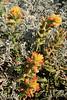 North Bluff Trail wildflowers