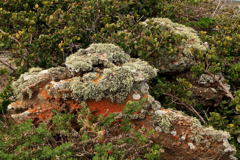 Lichen covered rocks and lemonadeberry on bluffs Glass Float Beach, located at the far northeastern corner of San Miguel Island<br /> <br /> .