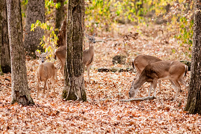 Wildlife at Chickamauga & Chattanooga National Military Park