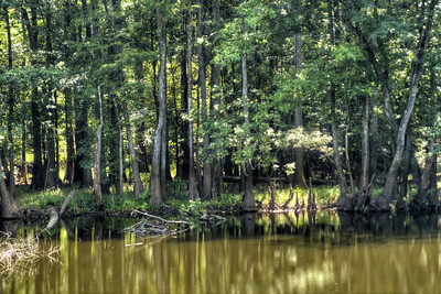 Light peaks through the towering trees along Weston Lake at Congaree National Park in Hopkins, SC on Saturday, July 25, 2015. Copyright 2015 Jason Barnette
