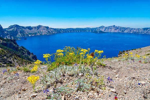 Crater Lake Flowers - Crater Lake-2