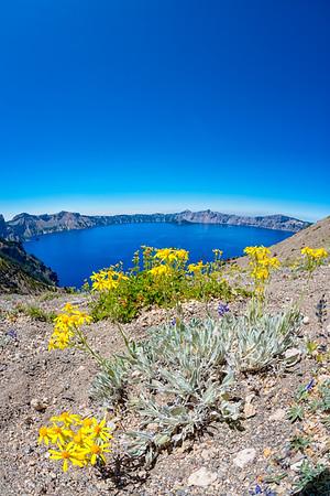 Crater Lake Flowers Fish Eye - Crater Lake-4