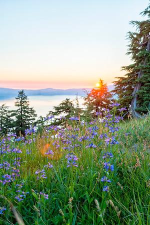 Crater Lake Sunrise Flowers - Crater Lake-2