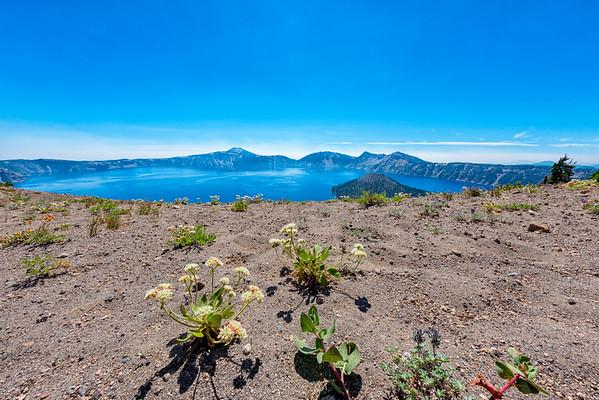 Crater Lake Flowers Fish Eye - Crater Lake