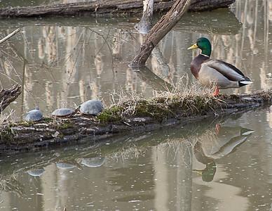 Gathering on the Lake