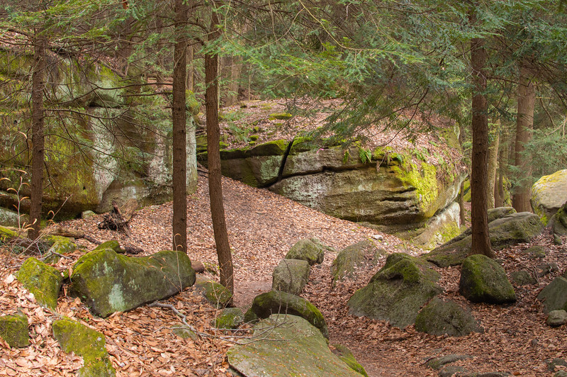 Ledges in the Woods