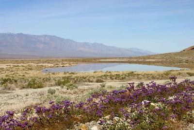 Death Valley 168