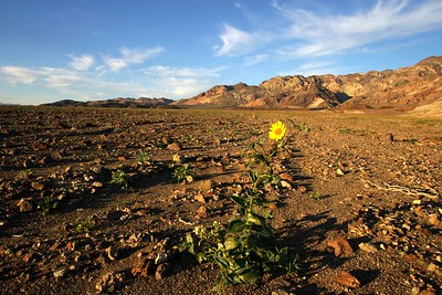 Death Valley 025