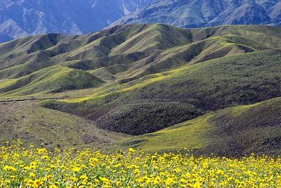 Death Valley 155