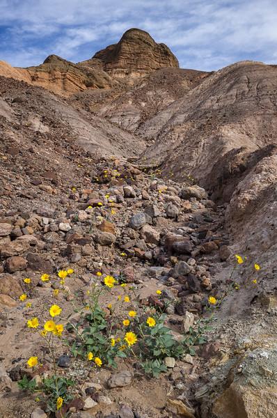Desert Gold in the Badlands