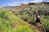 Dinosaur National Monument on Utah-Colorado border - 33 - 72 ppi