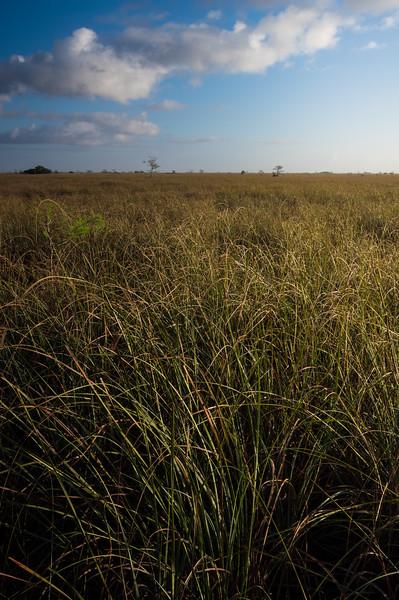 A Sea of Grass