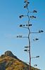 Fort Bowie Nat'l Historic Site, AZ - D6-C3 -0268 - 72 ppi
