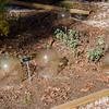 Growing herbs in a garden