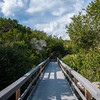 Boardwalk in the mangroves