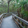 Boardwalk through the jungle.