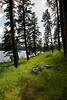 Trees at the Lakes Edge