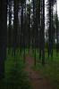 Path at Bowman Lake