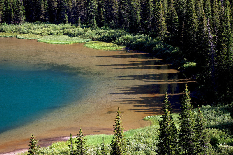 The glacier blue, mud and tree shadows mix and mingle on the edge of Lake Josephine in Glacier National Park, Montana.
