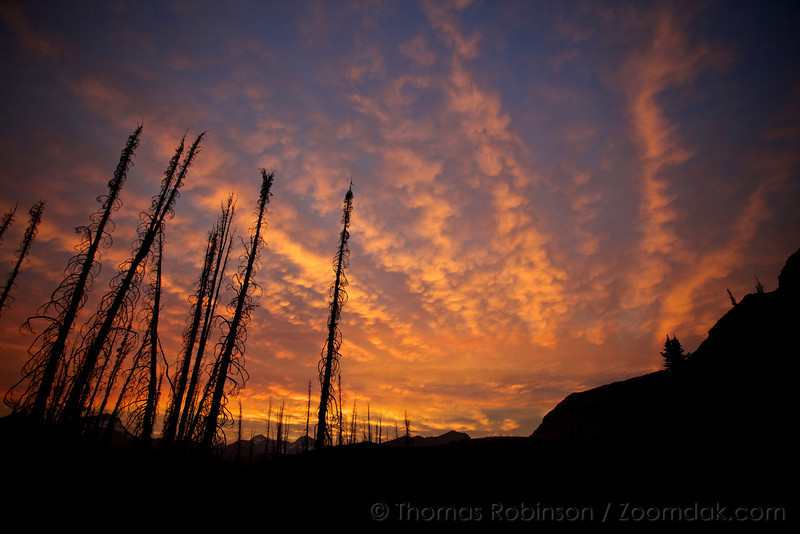A vibrant fiery sunset above the burned tree scrags at Fifty Mountain in Glacier National Park, Montana.