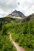 Swiftcurrent Trail and Mount Wilbur