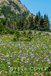 Wildflower Mountain