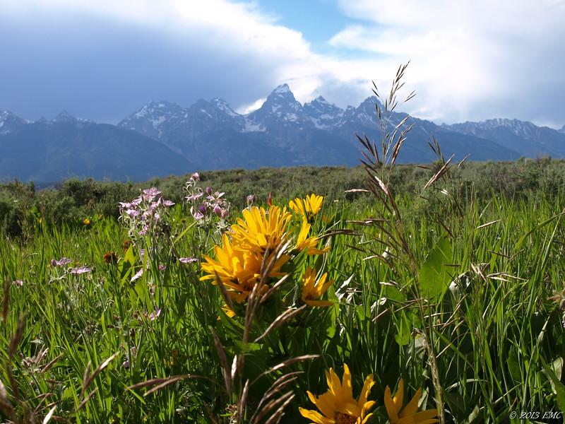 Wildflowers & Grand Teton Mountain