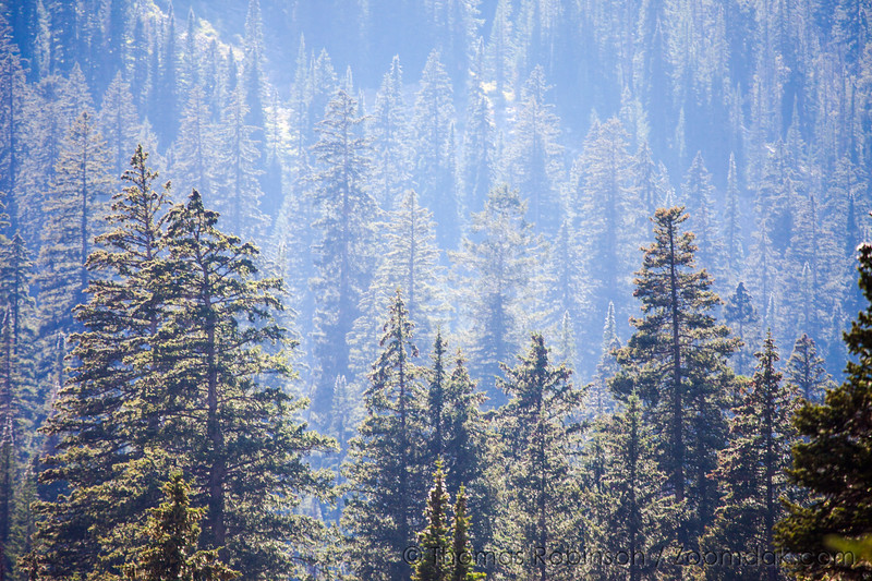 Receding Trees