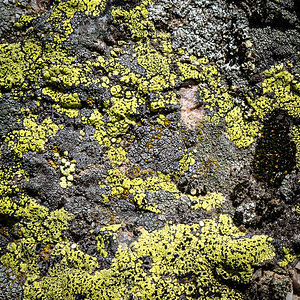 Lichen Or Not