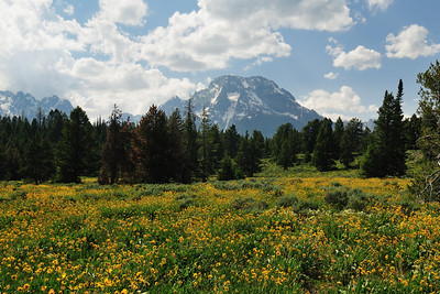 Wildflowers and Mount Moran of the Teton range